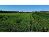 Kırklareli Merkez De Yatırımlık  Satılık Arsa Tarla Ve Çiftlikler